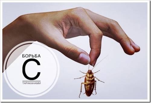 Борьба с тараканами в квартирах и на предприятиях