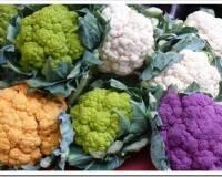 Какие сорта цветной капусты бывают