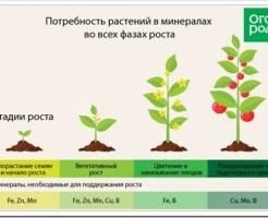 Какие есть микроэлементы для подкормки растений